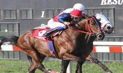 Contenido de la imagen Calypso superó a Bradock (Jockey Club del Perú)