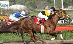 Contenido de la imagen Ballotage venció de punta a punta (Jockey Club del Perú)