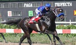 Contenido de la imagen Peyback Manning  triunfó de punta a punta (Jockey Club del Perú)