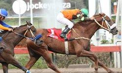 Contenido de la imagen Goleen Rock reapareció ganando (Jockey Club de Perú)