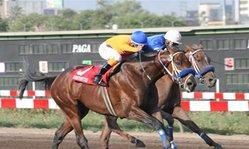 Contenido de la imagen Al Qasr superó a Almudena (Jockey Club de Perú)