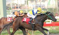 Contenido de la imagen Andeluna logró su mejor éxito (Jockey Club del Perú)