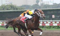 Contenido de la imagen Ballotage derrotó a Good Shine (Jockey Club del Perú)
