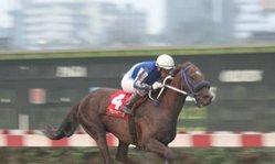 Contenido de la imagen Raffie´s GOld superó a Georgui Lui (Jockey Club del Perú)