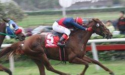 Contenido de la imagen Mari Cari superó a Lady Solange (Jockey Club del Perú)