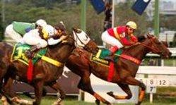 Contenido de la imagen Didimo fue el héroe en el Grande Premio Brasil (Turfdiario)