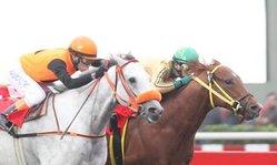 Contenido de la imagen Georgui Lui superó a Mr. Ninmar (Jockey Club de Perú)
