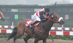 Contenido de la imagen Miterrand superó a Fahed Jr. (Jockey Club del Perú)