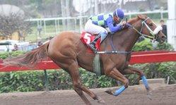 Contenido de la imagen La Maguita conservó su invicto (Jockey Club del Perú)