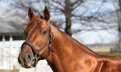 Contenido de la imagen Pure Prize, claro dominador de la temporada 2012 (Turfdiario)
