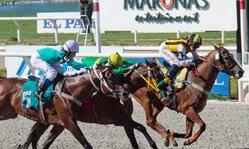 Contenido de la imagen Una carrera hecha a la medida de Zíngaro