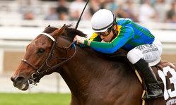 Contenido de la imagen Suggestive Boy en el máximo nivel americano (caballosdelmundo.com)