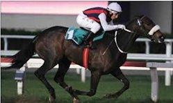 Contenido de la imagen Malibú Queen se lesionó y fue retirada de las pistas (Turfdiario)
