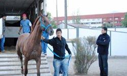 Contenido de la imagen Las delegaciones arribaron sin problemas a Chile (Turfdiario)