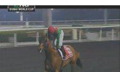 Contenido de la imagen 2013 Dubai World Cup - Animal Kingdom
