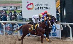 Contenido de la imagen Cucuel brilló en la reapertura del Hipódromo de Las Piedras.
