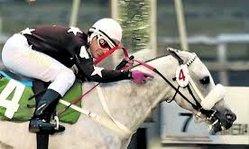 Contenido de la imagen La despedida de un gran caballo, se fue Aristocity (Campana de Largada)