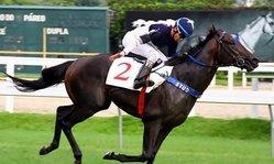 Contenido de la imagen La fortuna de disfrutar un caballo diferente (Turfdiario)