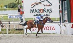 Contenido de la imagen Financial Aid ganó el GP Estimulo (G.2) y es la mejor yegua de Maroñas