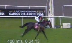 Contenido de la imagen Idolo Porteño - Gp Carlos Pellegrini 2014
