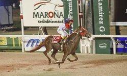 Contenido de la imagen Jump High nominado en el UAE Derby (G.2)
