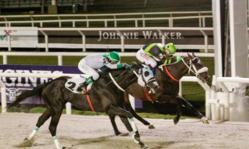 Contenido de la imagen Monje Negro ganó un Gran Premio memorable